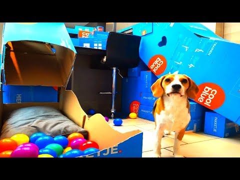 Cute Dogs Get A Giant Living Room Agility Course