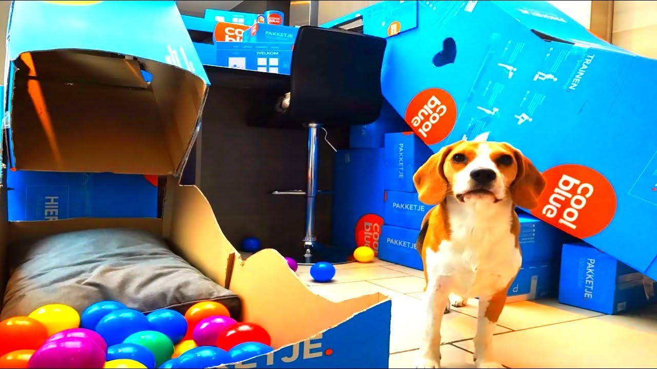build a diy agility course for dogs with cardboard youtube
