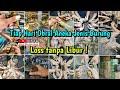 Live Obral Semua Jenis Burung Tiap Hari Minggu  Mp3 - Mp4 Download