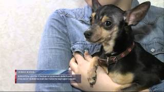 Волонтёры центра помощи бездомным животным спасли от человеческой жестокости еще одну собаку.