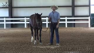 How To Ground Work Exercises Every Horse Should Know 1/6