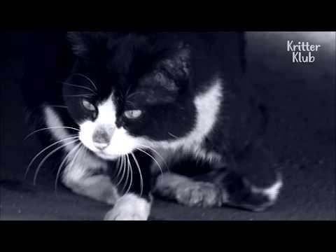 Injured Cat Lives In A Home Full Of Broken Glass   Kritter Klub