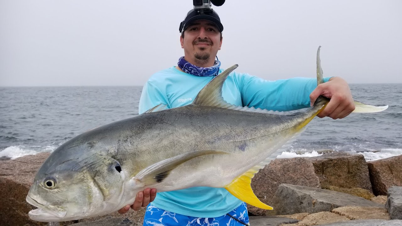 Jack Crevalle Run at Port Aransas Jetties