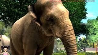 BabyBus - Tiki Mimi và trò chơi đi tham quan sở thú Châu Phi