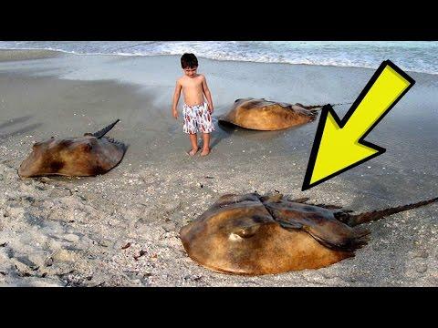 22  Animals That Survived Extinction