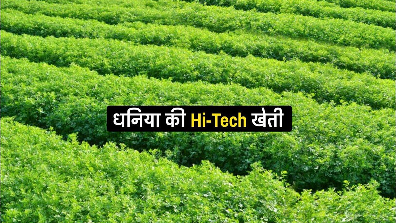 धनिया की सफल खेती   Dhaniya ki kheti kaise kare   Coriander farming   A to Z Video  हरि धनिया  Deshi