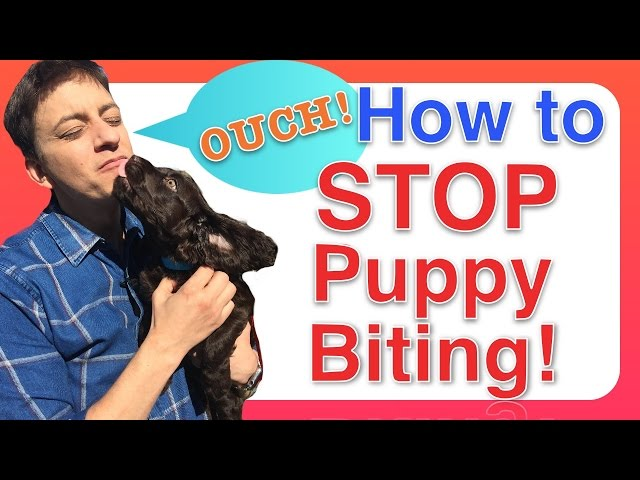 How to Train a PUPPY to STOP BITING
