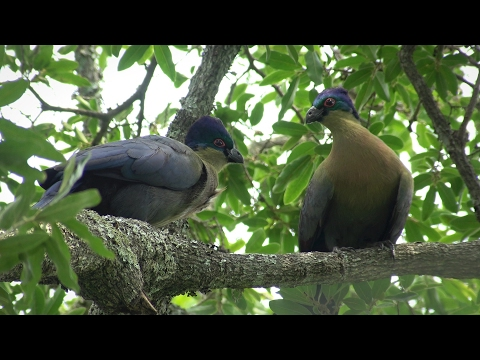 Birds of northern South Africa part 4