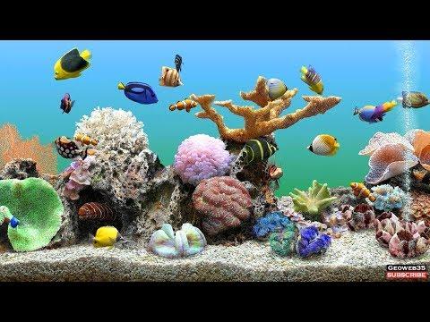 Marine Aquarium Screensaver Best Fish Tank 3 Hours Of Relaxing Video 60fps