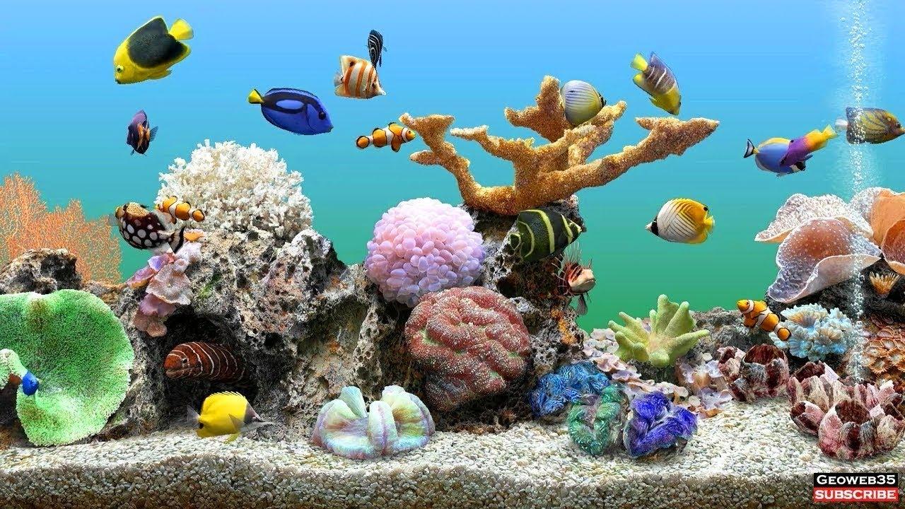 Marine Aquarium Screensaver Best Fish