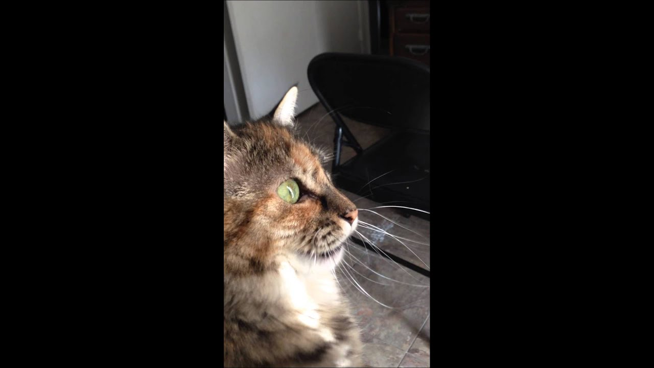 Youtube Cat Eye Tutorial: Cat Gibberish
