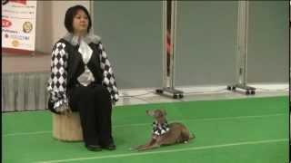 2012 - Freestyle Ritsue Makabe & Luce (Italian Greyhound) Music : S...
