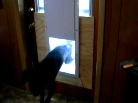 high tech pet door video 1