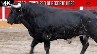 Image del Video: TOROS: Certamen de recorte libre en Fitero