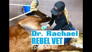 Dr. Rachael Rebel Vet Episode 10 'I'll Take Those' Horse Castration