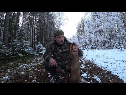 Охота с ИЖ-54. Взял куницу без собаки. Республика Коми по первому снегу.
