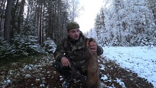 Охота на куницу по первому снегу Коми край