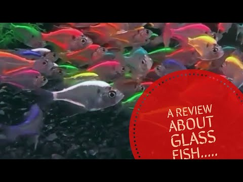 About Glass Fish In Tamil.