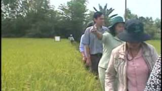 Rice production in Angiang VIETNAM, part 1