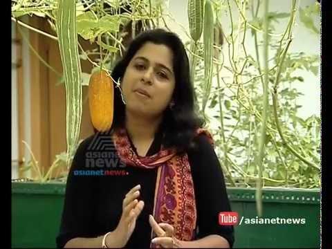 Aquaponics: new farming method | Money Time 8 October 2015