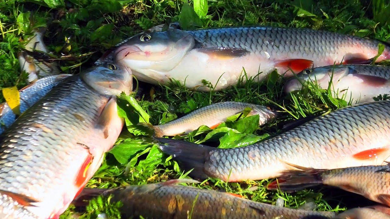 Летняя рыбалка на Оке с ночевкой .Вот это рыбалка.