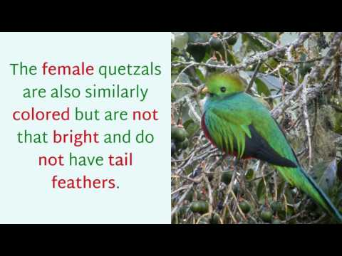 17 Very Interesting Things You Should Know About Quetzal