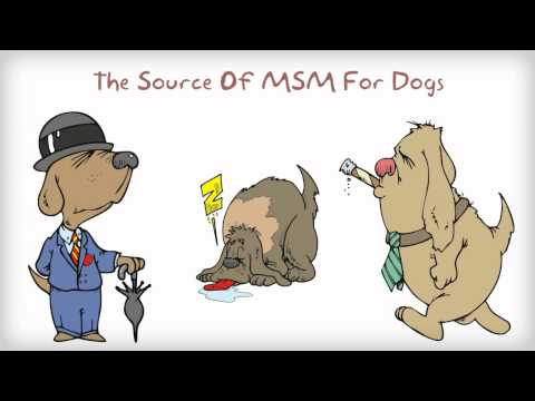 Benefits Of MSM For Dogs - Why Give Your Dog Glucosamine Chondroitin MSM Together?