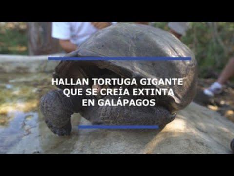 Hallan una tortuga gigante en Galápagos que se creía extinta