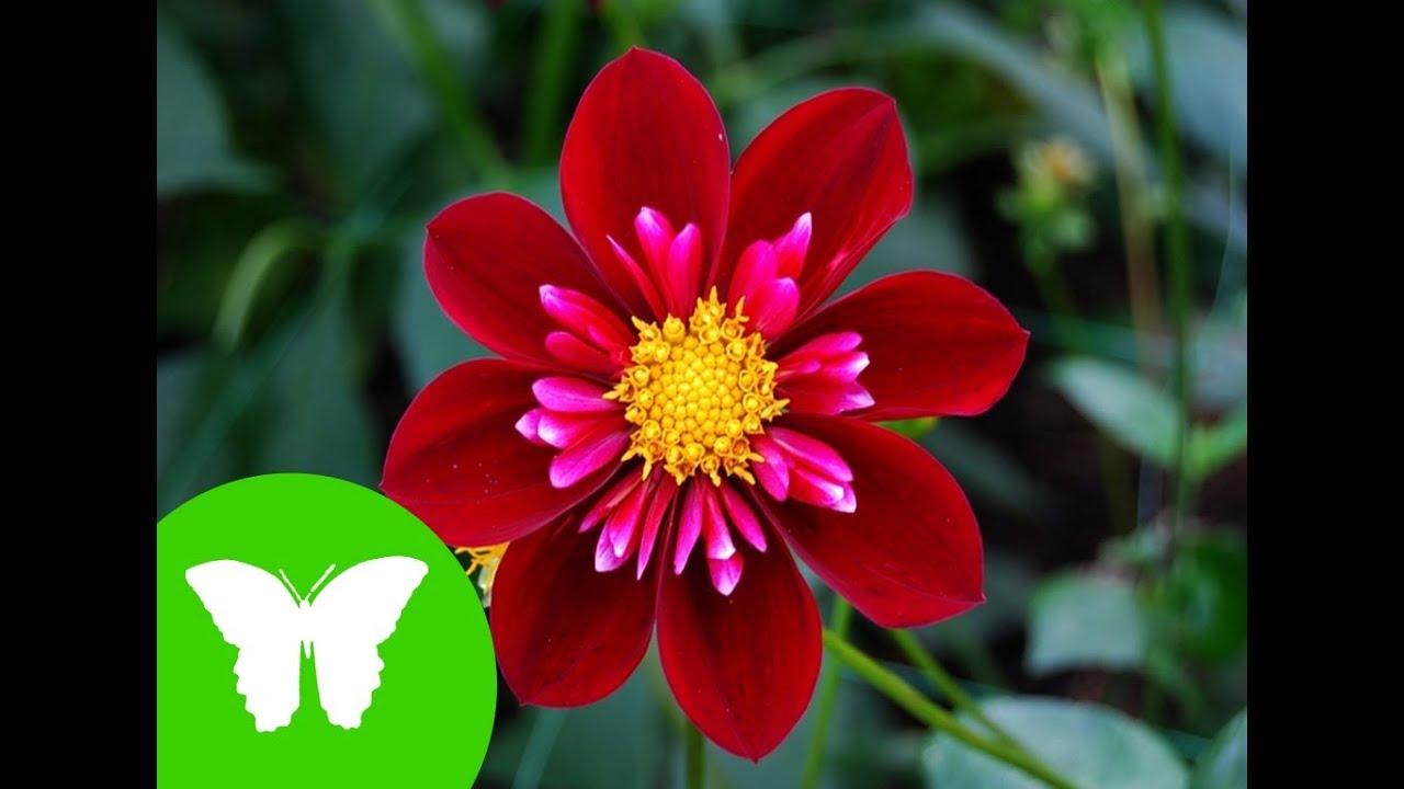 La eduteca las plantas tipos relaci n y reproducci n for Que son plantas ornamentales ejemplos