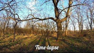 Time-Lapse. Вне времени. (облака, закат)(Рубрика, суть которой погрузиться в мир другой реальности, туда, где законы течения времени нарушены, где..., 2016-03-20T10:34:19.000Z)