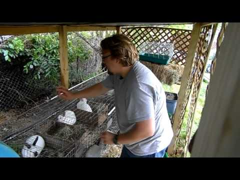 Rabbit breeding problems from YouTube · Duration:  3 minutes 42 seconds