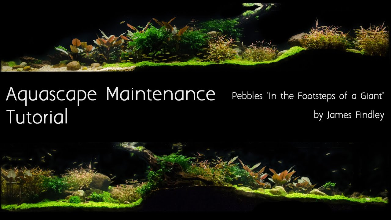 Aquascape Maintenance Tutorial Guide- The Green Machine ...