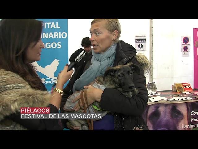 Pielagos acogió el I Festival solidario de adopcion canina
