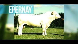 Epernay - Le numéro 1 français en IVMAT
