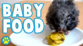 Is Baby Food Safe For Hamsters?