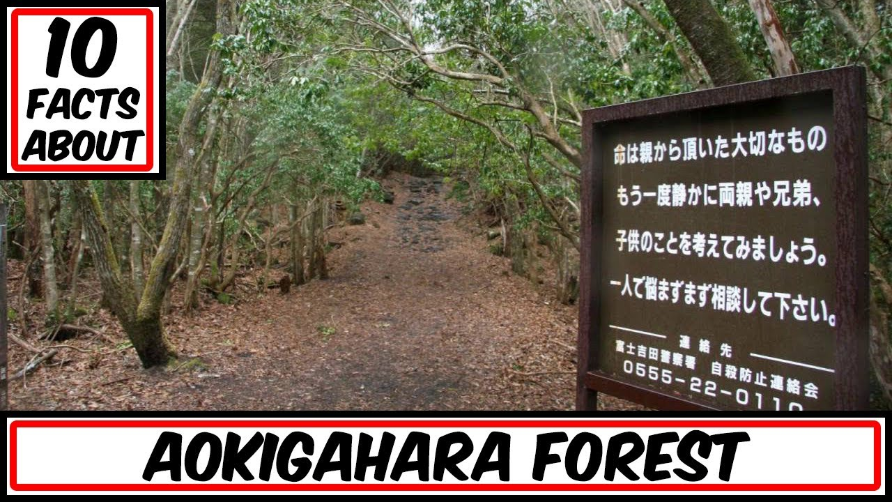 10 Facts About Aokigahara Forest (The Japanese Suicide Forest)