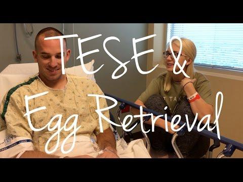 Egg Retrieval & TESE - Not what we had hoped