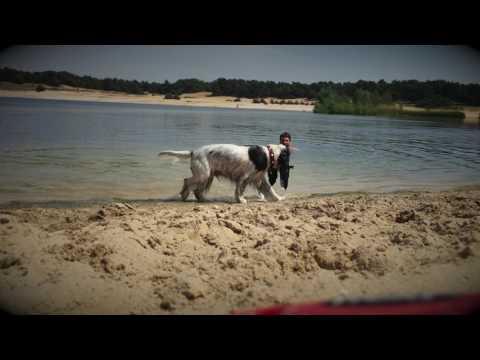 Swimming with Luna | English Cocker Spaniel