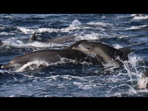 Muscat Dolphins and Snorkeling TRIP with Sidab Sea Tours #Beata&Gabor 2017