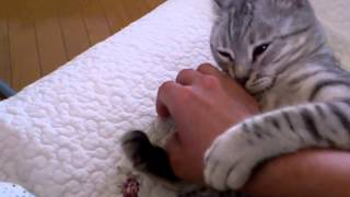 猫の甘えん坊!