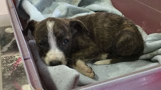 puppy abandoned under car gets rescued just in time