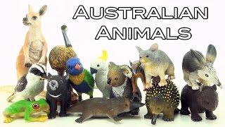 14 Awesome Australian Animals Toys - Kangaroo, Kookaburra, Echidna, Platypus, Emu, Koala, Bilby
