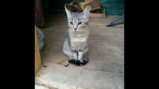 Эта мила кошка - хороший охотник.