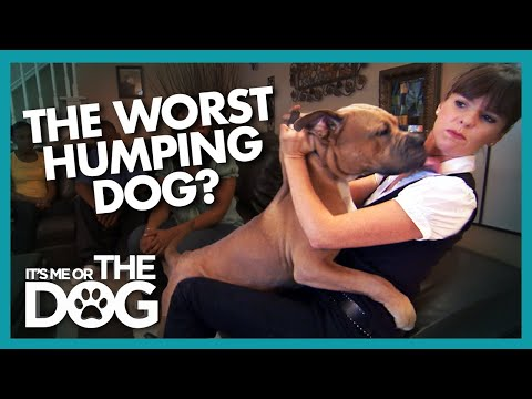 Is 'Prince' The Worst Humper EVER? | It's Me Or The Dog