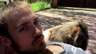 Очень наглый пёс хочет обнимашек. Very Impudent dog asks for hugs