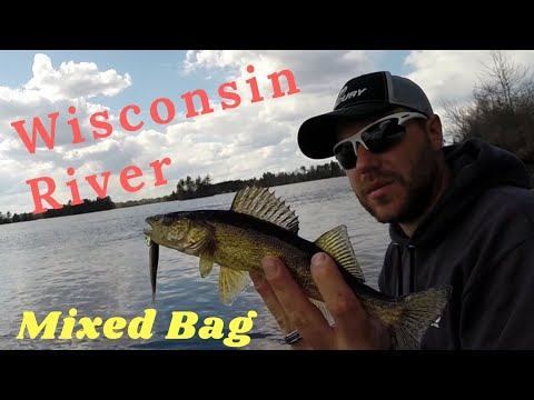 Wisconsin River Fishing Mixed Bag   Walleye, Perch, A Crappie, A Bass, And A Northern