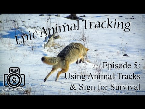 Using Track/Sign Aging for Survival | Agate Fossil Beds Nebraska | S1 Ep3