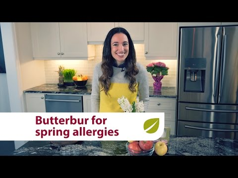 Butterbur   Natural Relief for Spring Seasonal Allergies