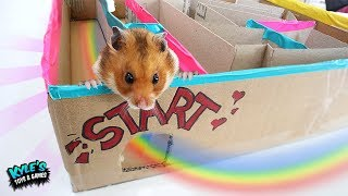 Giant Hamster BOX FORT RACE! Who IS THE BEST?