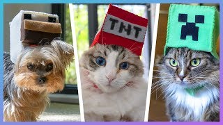 I Made MINECRAFT HATS For My Cats and Dog!